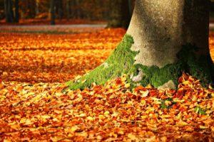 l-automne-est-arrivé